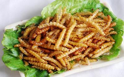 美食昆虫瑞丽油炸竹虫在关注王刚作家哪里美食图片