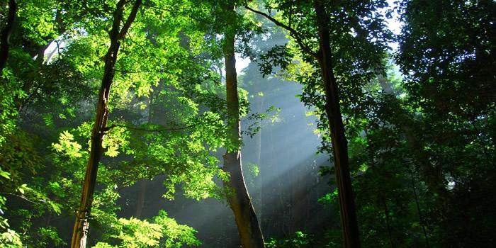 西双版纳望天树景区位于云南省西双版纳州勐腊县境内,距景洪市134km,距国家一级口岸磨憨60km。是地球上北纬21度唯一的一片绿洲,是热带雨林国家公园的核心景区。您可以挑战世界第一高,中国第一条树冠走廊惊险刺激;和雨林巨人--望天树( 热带雨林的标志性树种)进行天人合一对话;观赏热带雨林五大奇观--板根、绞杀、寄生附生、滴水叶尖、老茎怀春;体验被誉为东方亚马逊的南腊河热带雨林河流奇观。领略到最原汁原味的傣族、哈尼族(爱尼人、补过人、排角人)、布朗族(克木人、卡米人)、瑶族、彝族的民俗风情和原生态